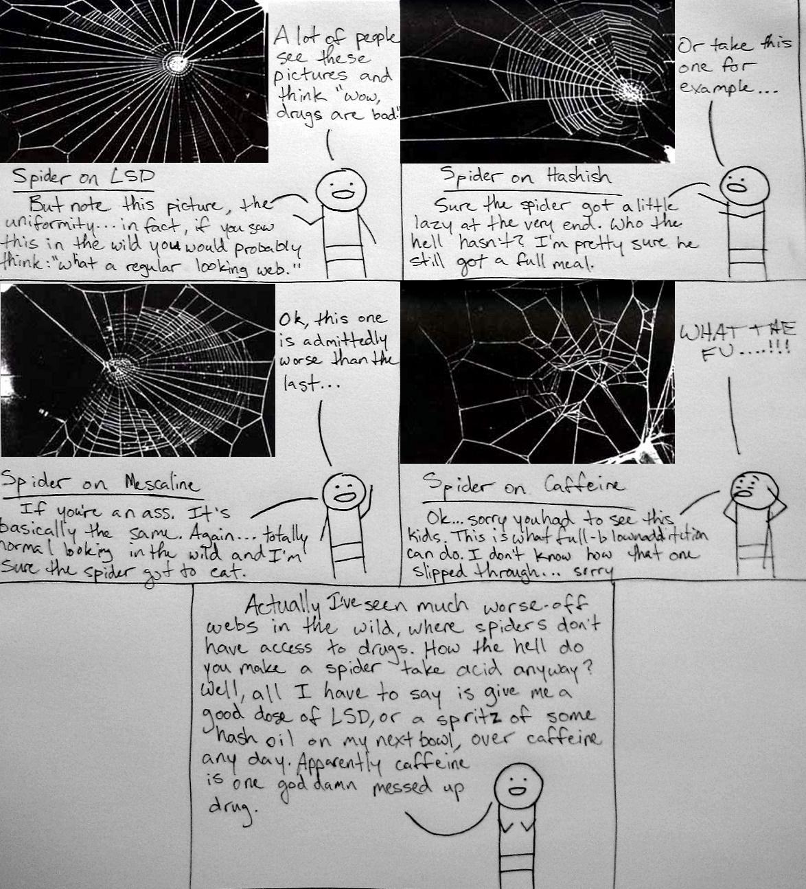 Spiders like drugs too
